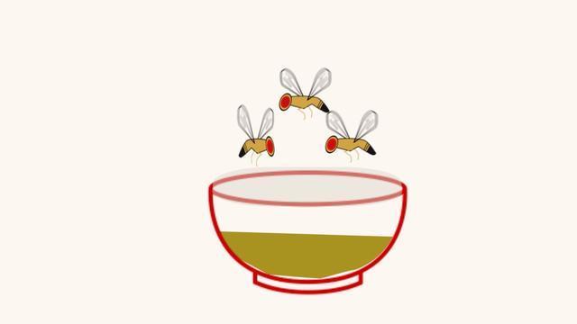 Zo kom je van fruitvliegjes af