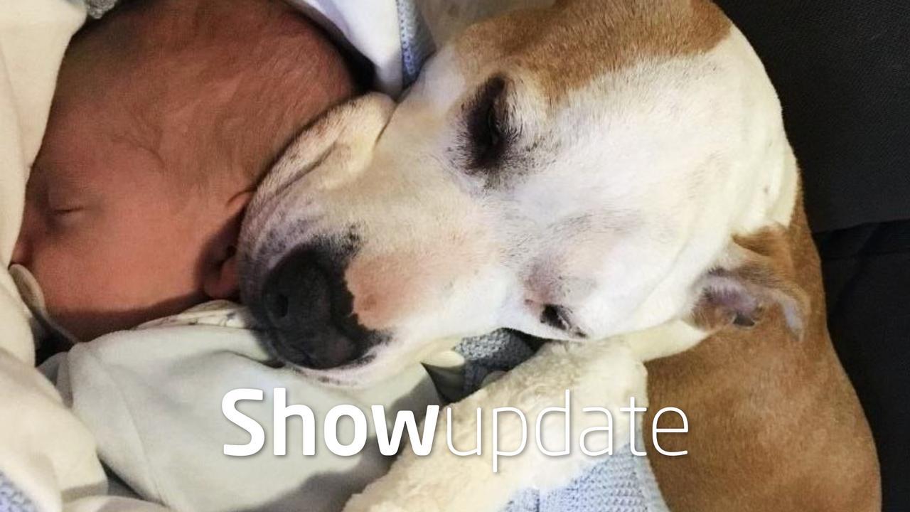 Show Update: Baby André Hazes jr. naast hond 'gevaarlijk'