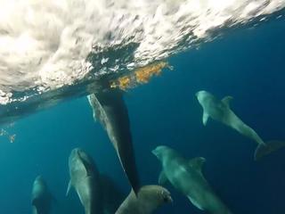 Boegcamera filmt te midden van groep dolfijnen in Florida