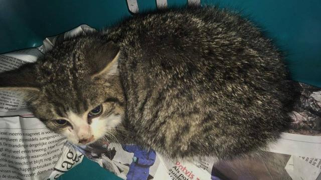 Medewerkers vuilverbrander Alkmaar redden kat uit vuilnisbunker