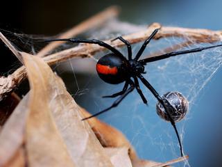 Spin viel man aan tijdens toiletbezoek