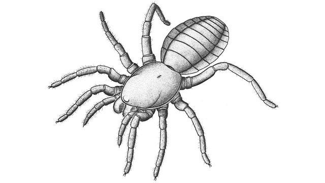 Oudste fossiel van spinachtige ontdekt