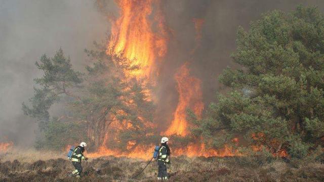 Natuurgebied van 150 hectare verloren gegaan door brand in Limburg
