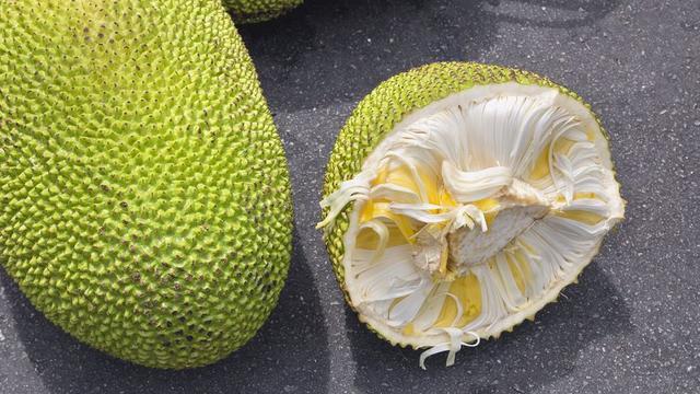 De vlezige jackfruit gebruiken vegakoks graag in gerechten waar traditioneel kip in zit.