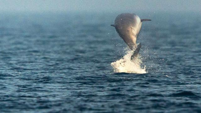 Biologen vinden dolfijn met dertig plastic zakken in maag