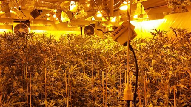 Drugssquad vindt hennepkwekerij in leeg bedrijfspand