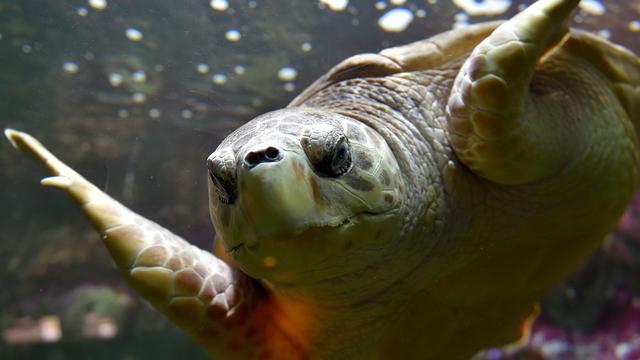 Thaise artsen verwijderen 915 munten uit zeeschildpad