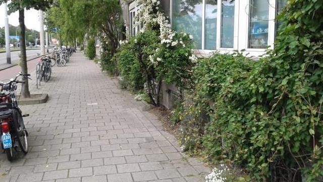 NK tegelwippen van start gegaan in Rotterdam en Amsterdam