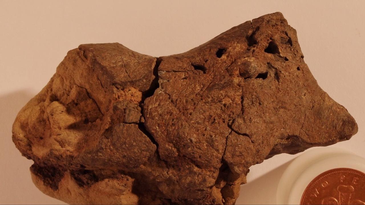 Kiezelsteen blijkt 133 miljoen jaar oud fossiel van hersenen dinosaurus