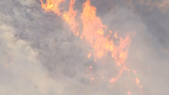 Grote bosbrand verwoest 300 hectare natuurgebied in Californië