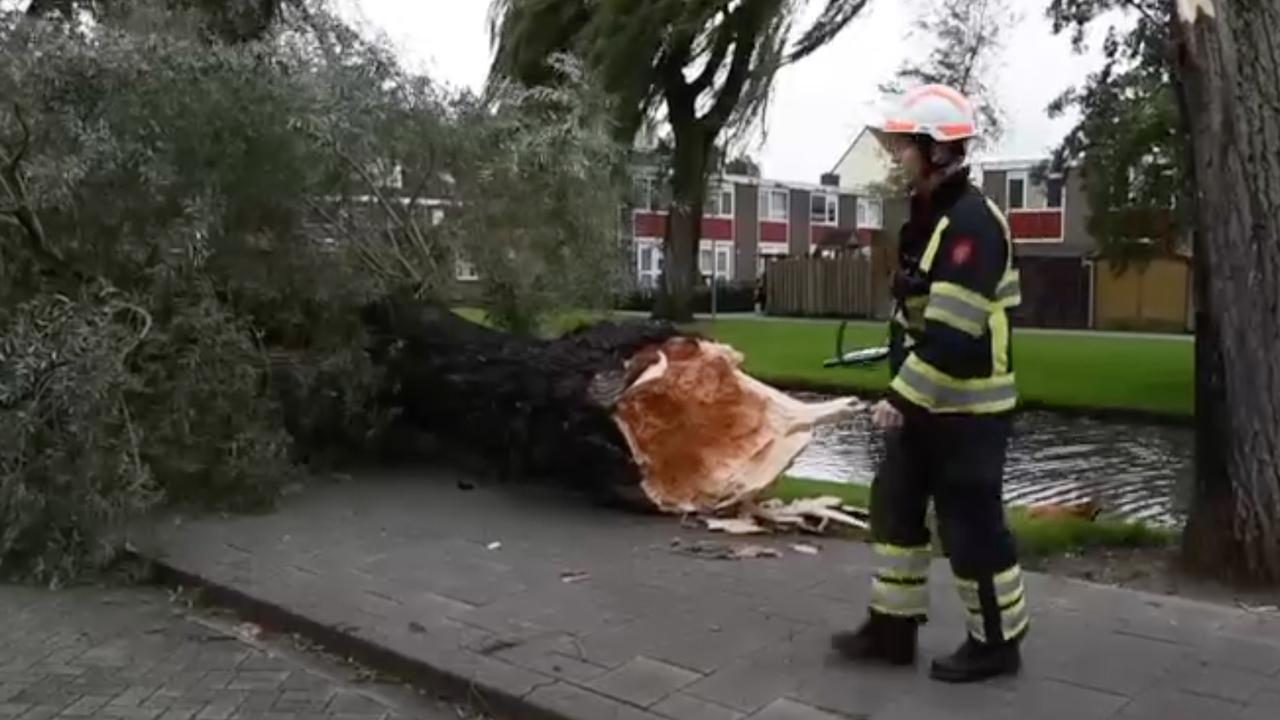 Herfststorm zorgt voor harde windstoten en omgevallen bomen