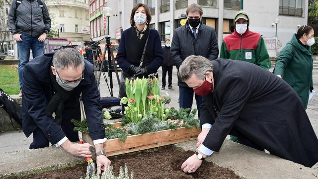 Nederland plant 10.000 tulpenbollen in door terrorisme getroffen stad Wenen