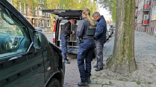 Drie minderjarigen gepakt voor groepsverkrachtingen Rotterdam en Schiedam