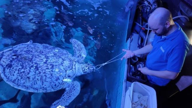 Aquarium Sea Life heeft door corona extra tijd om de dieren te trainen