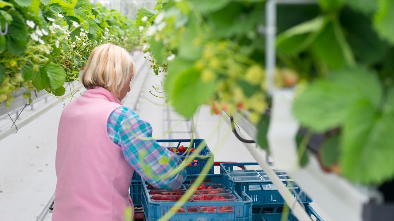 Bijna een op drie Poolse werknemers na vijf jaar nog in Nederland