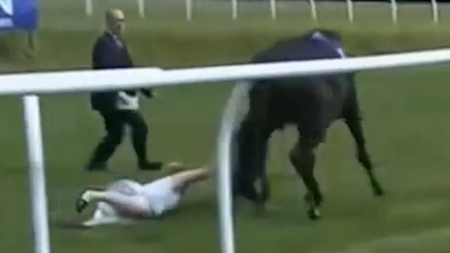 Verslaggeefster vangt live op tv losgeslagen paard in Wales