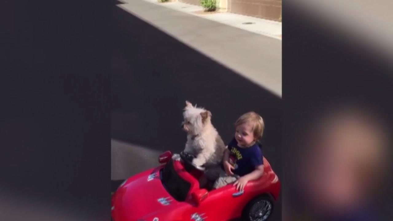 Hond rijdt jongetje rond in auto