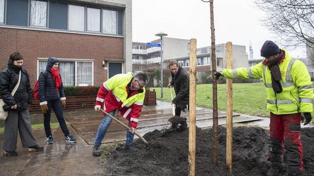 Wethouder Diepeveen plant eerste nieuwe boom na grootschalige essenkap
