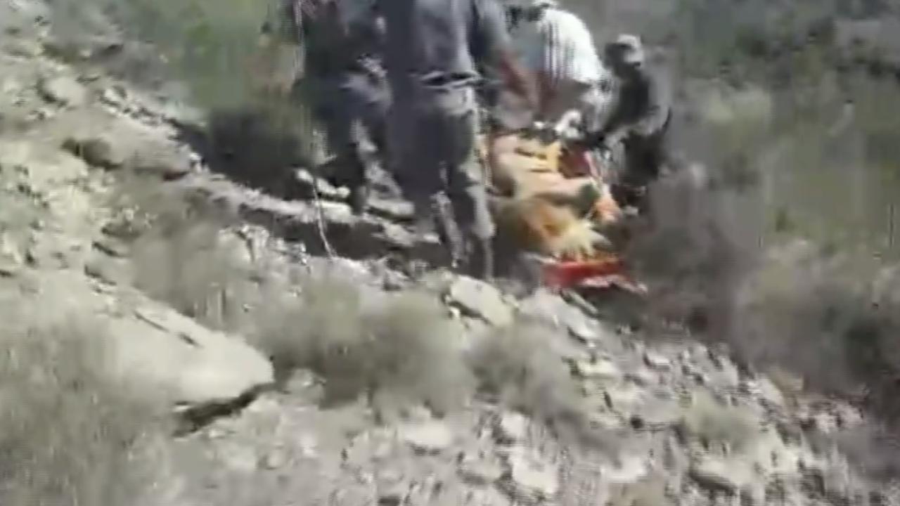 Ontsnapte leeuw Sylvester gevangen
