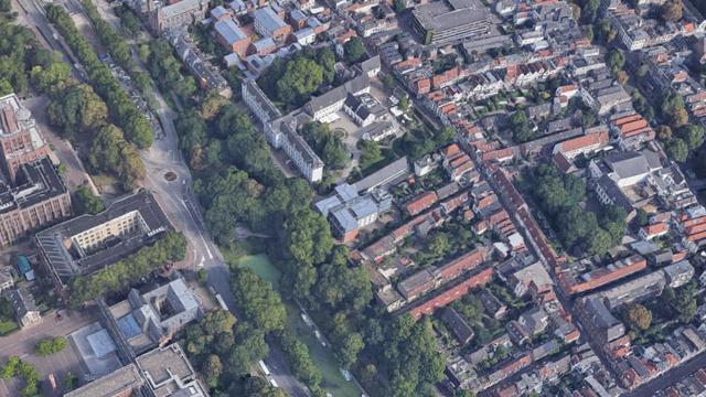 Dertig bomen langs de singel in Utrecht gesnoeid om vogelnesten te voorkomen