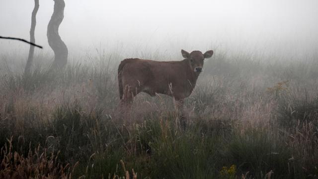 KNMI geeft in Noord-Holland code geel af voor dichte mist