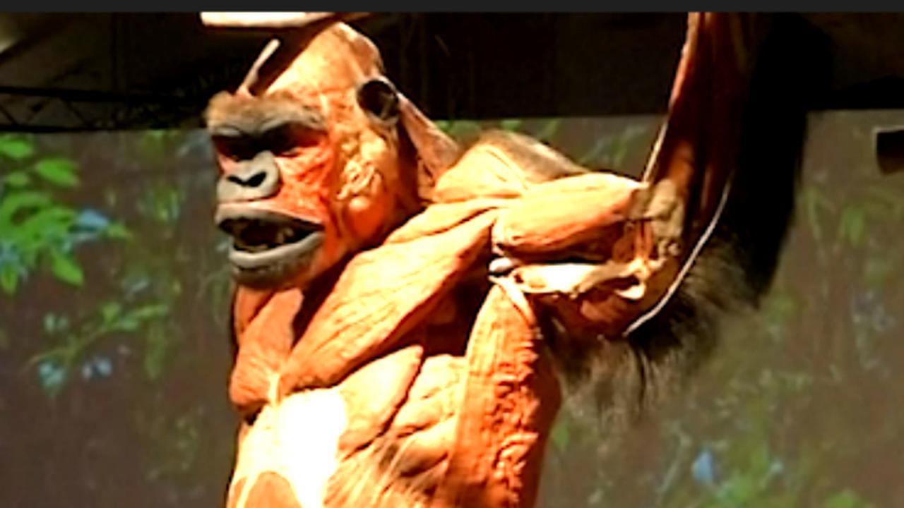 Duitse Body Worlds voegt honderd dieren toe aan expositie