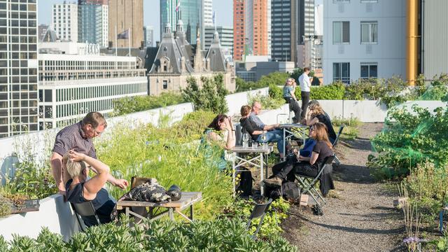 Weekend in Rotterdam: Wijn, veganistisch eten en film op het dak