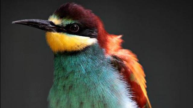 Dieven stelen zeldzame vogels uit dierenpark in Best