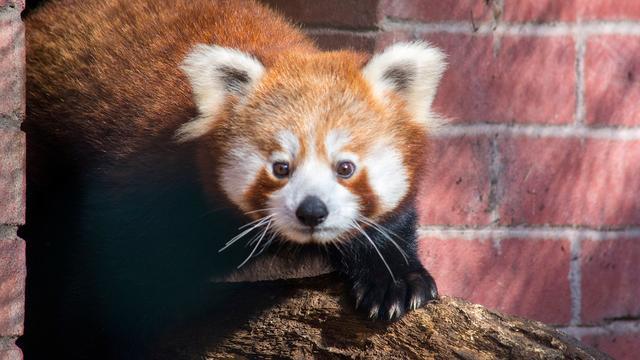 Langere openingstijden dierenparken door drukte