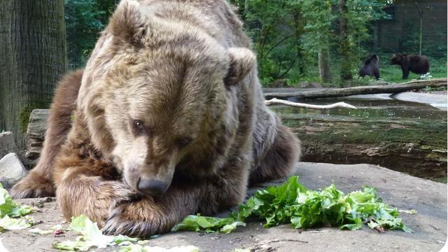 Een eenvoudige manier om een berenmarkt te verslaan