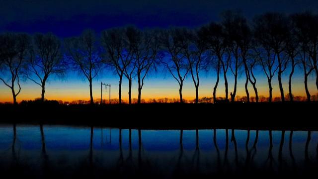 475 bomen langs Kanaal door Walcheren vervangen