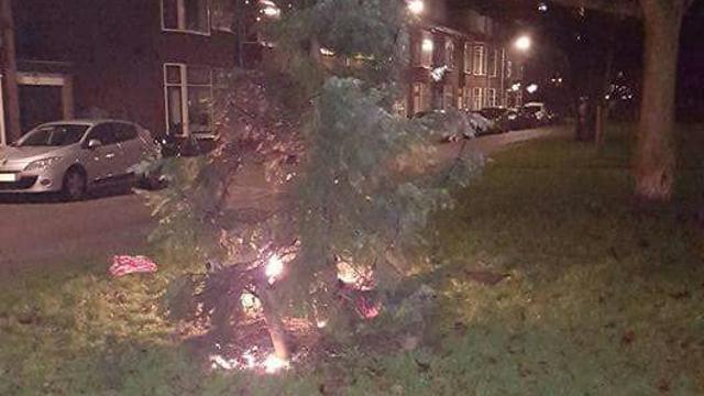 Kerstboom Jacob Catslaan in brand gestoken