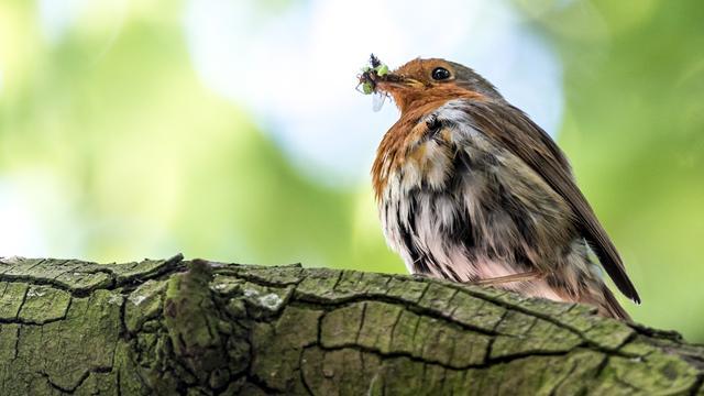 VARA start zoektocht naar Nationale Vogel