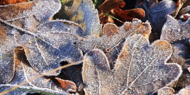 Koudste herfstnacht sinds 1998 gemeten