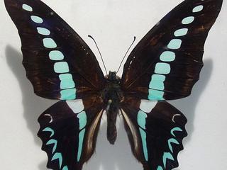 Twee genen verantwoordelijk voor patroon en kleur