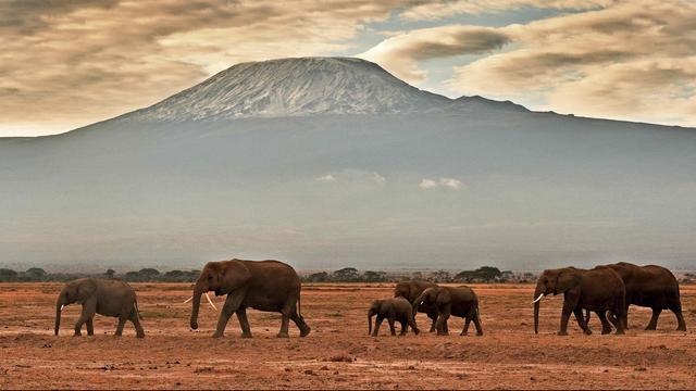 'Olifanten in het wild slapen nauwelijks'