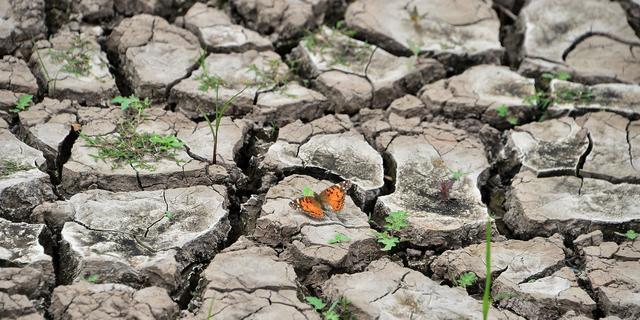 De belangrijkste conclusies uit het VN-rapport over uitsterven van soorten