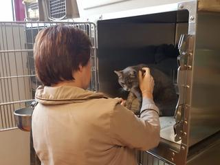 Dierenambulance traceerde oorspronkelijke baasje van kat
