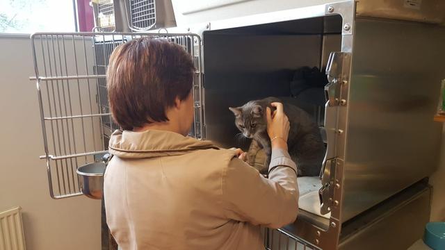 Kat na jarenlange vermissing aangetroffen bij McDonalds in Zuidoost