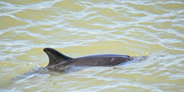 Tuimelaardolfijn na dagen in haven van IJmuiden weer terug in Noordzee