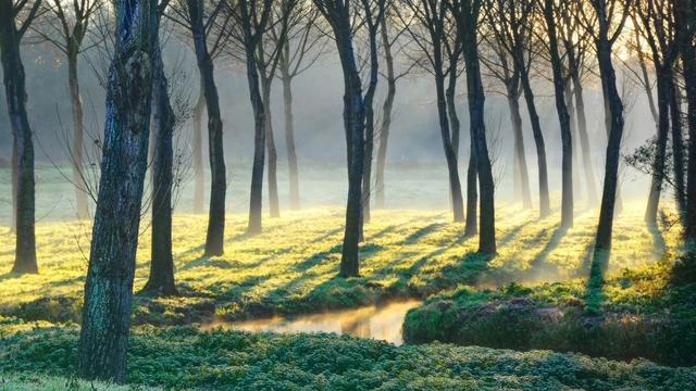 Ongebaande paden: 'Het Bieslandse Bos is jong maar veelzijdig'