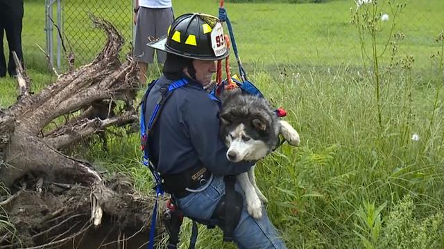 Brandweerman redt hond uit sinkhole in VS