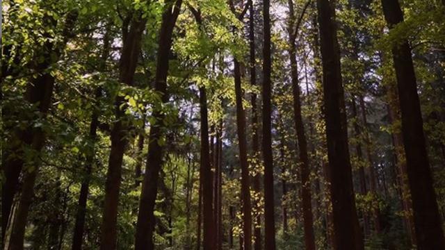Utrecht een van gemeenten met kleinste aantal bomen per inwoner