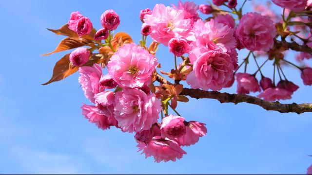Zomerdroogte neemt (ook) toe door snellere plantengroei in voorjaar