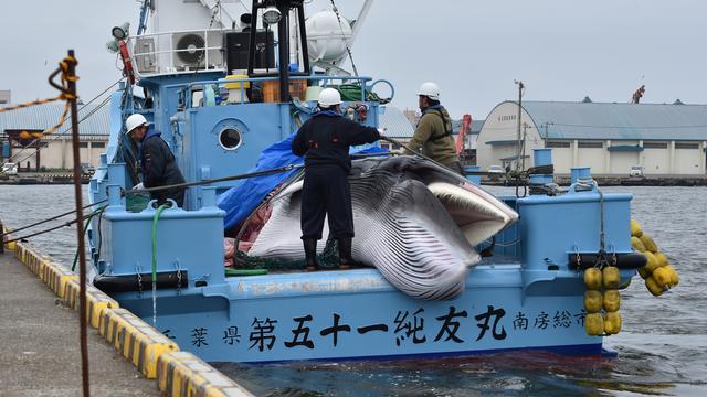 Japanners vangen eerste walvissen na opheffing jachtverbod