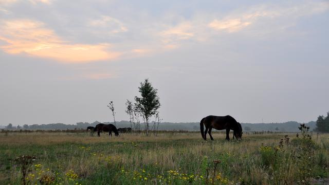 Weerbericht: Bewolking, grotendeels droog en in de middag meer zon