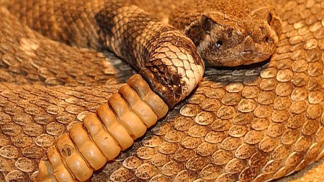 Texaanse familie heeft zonder het te weten 24 slangen onder huis