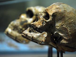Trektocht van mens 50.000 jaar vervroegd