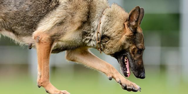 Hondensportvereniging zoekt pakwerkers