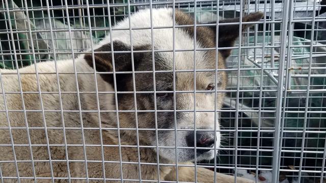 Bij bosbranden Californië vermiste hond na 101 dagen herenigd met baasjes
